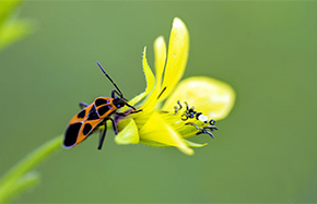 花開濕地 蜂蝶飛舞
