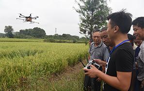 吉州區:農用無人機噴灑農藥