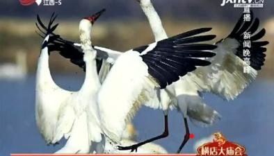 60多萬只候鳥飛抵越冬 鄱陽湖區進入最佳觀鳥期