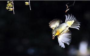 林中待飛鳥 攝友獲美圖
