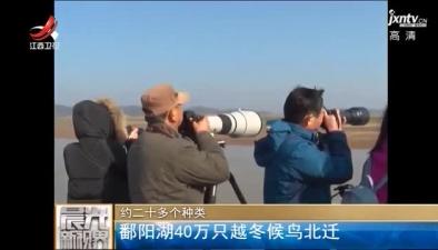鄱陽湖40萬只越冬候鳥北遷