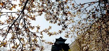 春暖花開競芳菲