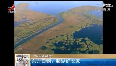 东方白鹳:鄱湖好安家