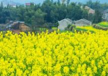 莲花县美丽乡村国际半程马拉松赛27日开跑