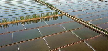 宁夏:黄河两岸 稻田如画