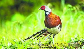 从打猎人到山区护鸟人