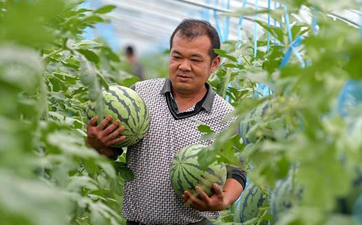 现代设施农业助力农民致富增收