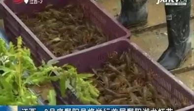 9月底鄱阳县将举行首届鄱阳湖龙虾节
