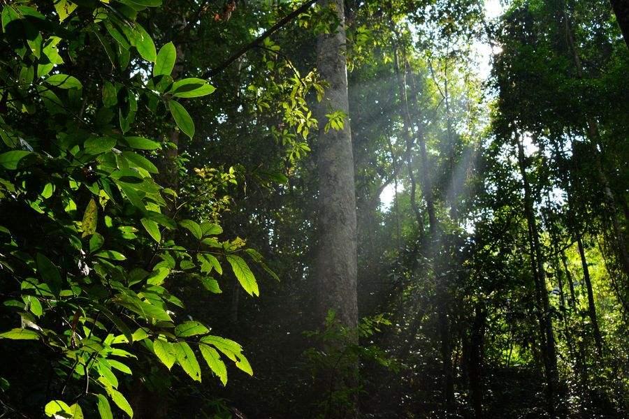十大森林旅遊目的地網絡投票