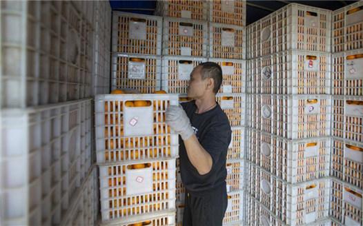 江西新幹:産業扶貧助增收
