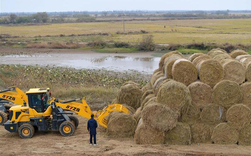 江西南昌:農田秸稈回收忙