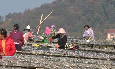 """鄱陽湖:漁家冬日""""曬秋""""忙"""