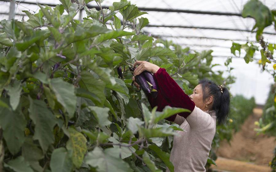 特色農業助力脫貧