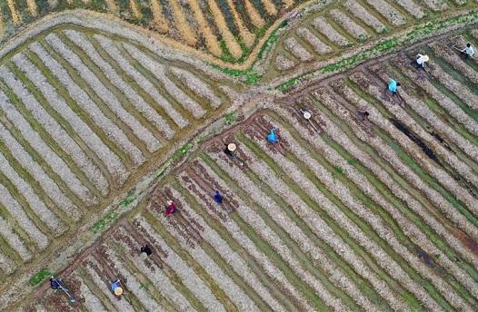 農忙在春天裏