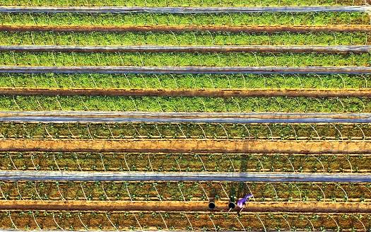 江西泰和:搶抓農時 春管春種