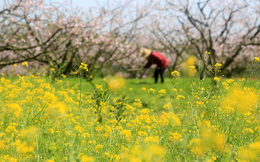 春分日 忙農事