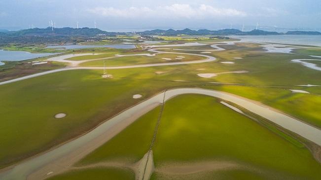 春到鄱陽湖 鵝黃嫩綠時