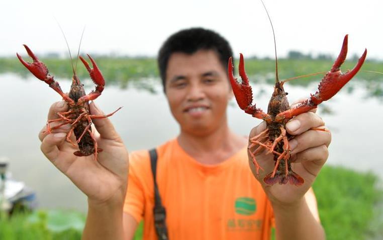 江西南昌:觀荷捕蝦富農家