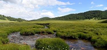 新疆哈巴河高山牧場美如畫