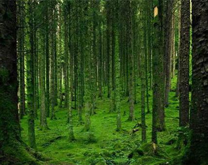 江西完成造林104萬余畝 超計劃近50%