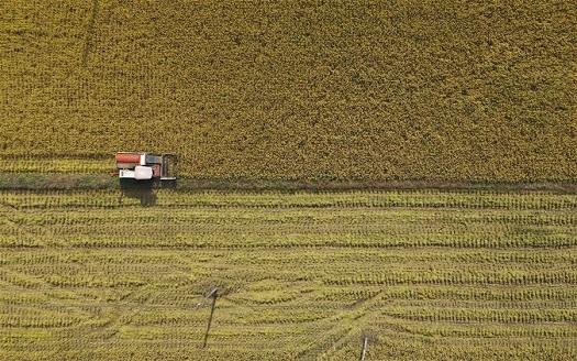 江西萬載:高産稻田迎來豐收季