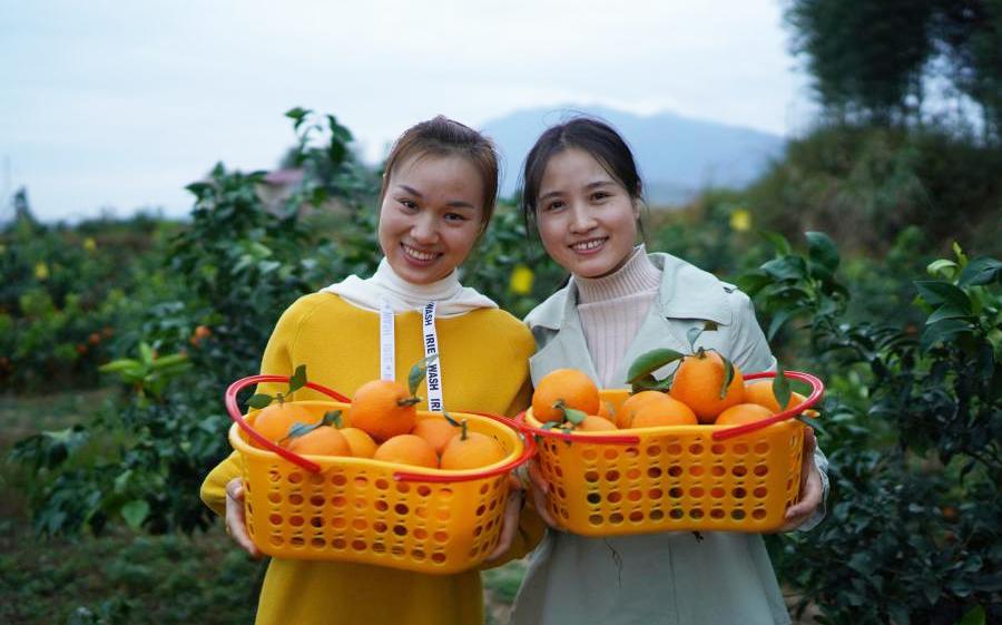 秋日橙飄香